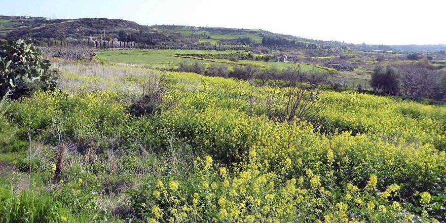 """Güneyde 5 bölge daha """"Natura 2000 Ağı""""na eklendi"""