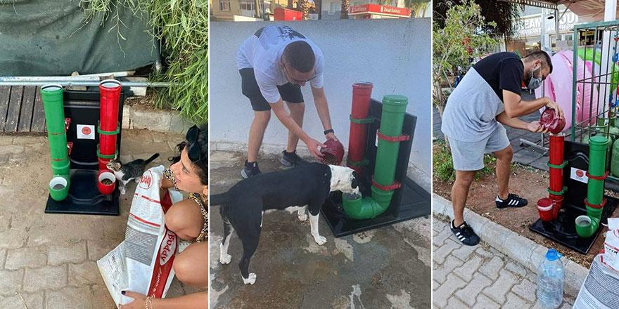 CTP Yeniboğaziçi Örgütü, sokak hayvanlarını unutmadı