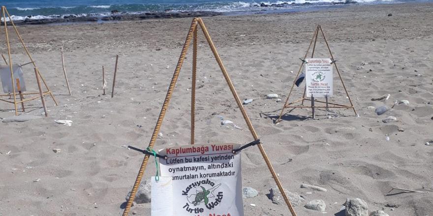 Karşıyaka Güzelyalı Sahili Kaplumbağa Projesi'nin ilk etabı yarın gerçekleştirilecek