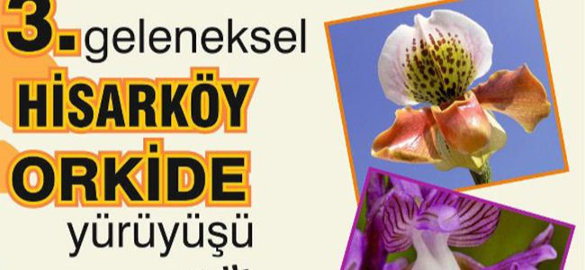 Hirasköy'de orkide ve doğa yürüyüşü…
