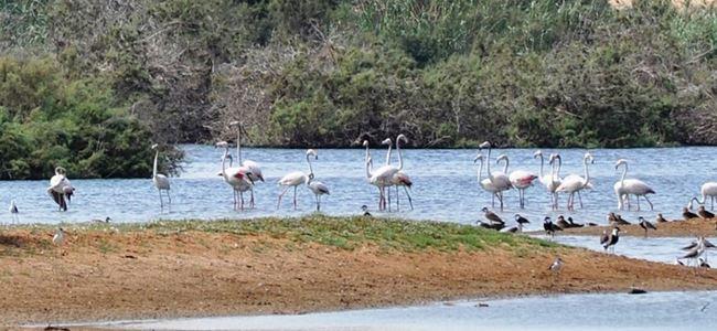 Ayluga Göleti kuş cennetine döndü