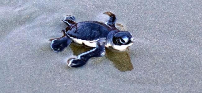 """Güney Kıbrıs'a """"Kaplumbağalar için sarı kart""""…"""