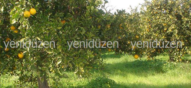 Narenciyeye SU YOK