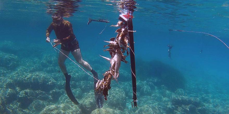 Yasak dönemde zıpkınla orfoz avlayan 1 kişiye yasal işlem