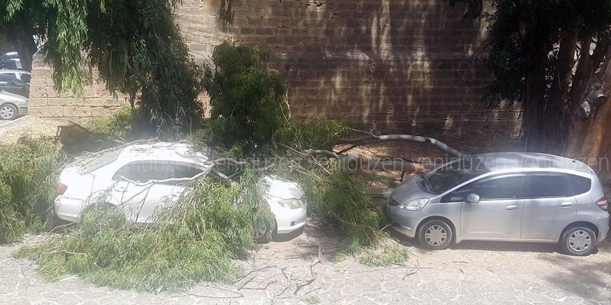 Asırlık ağaç aracın üzerine devrildi