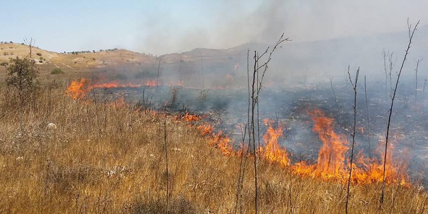 Serhatköy'de ara bölgede yangın…