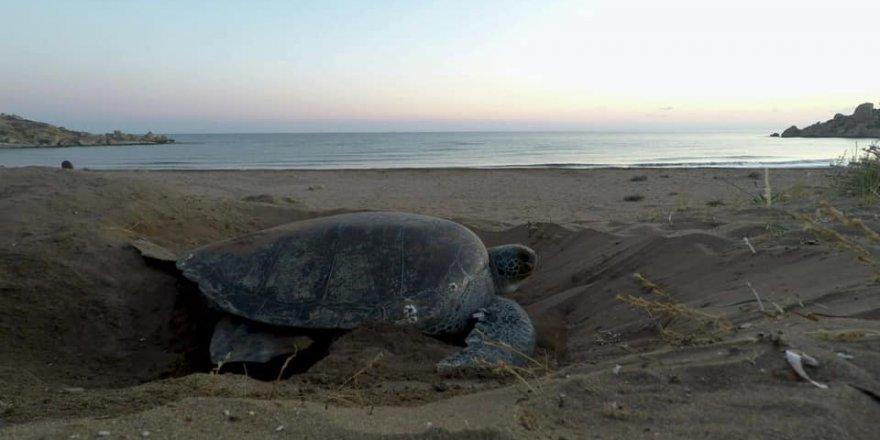 Kaplumbağaların ürediği sahiller için duyarlılık çağrısı