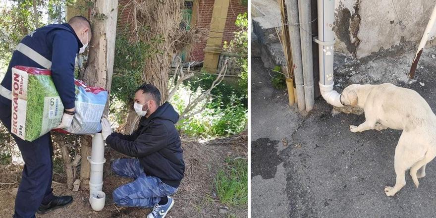 Lefke'de sokak hayvanları için mama kapları yerleştirildi