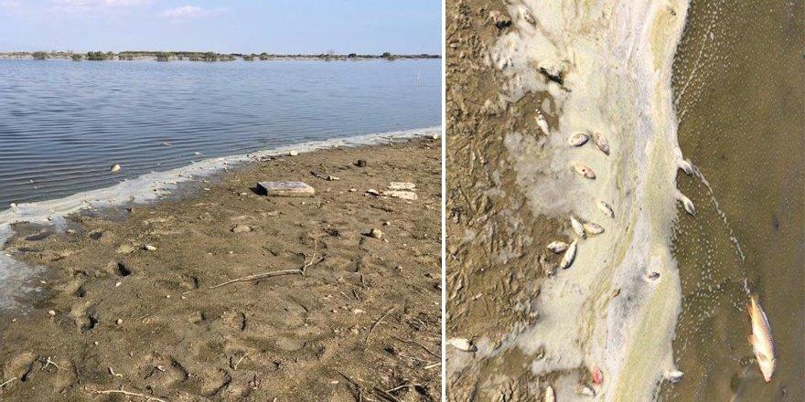 Köprülü Göleti'ndeki balık ölümleri için sudan örnek alındı