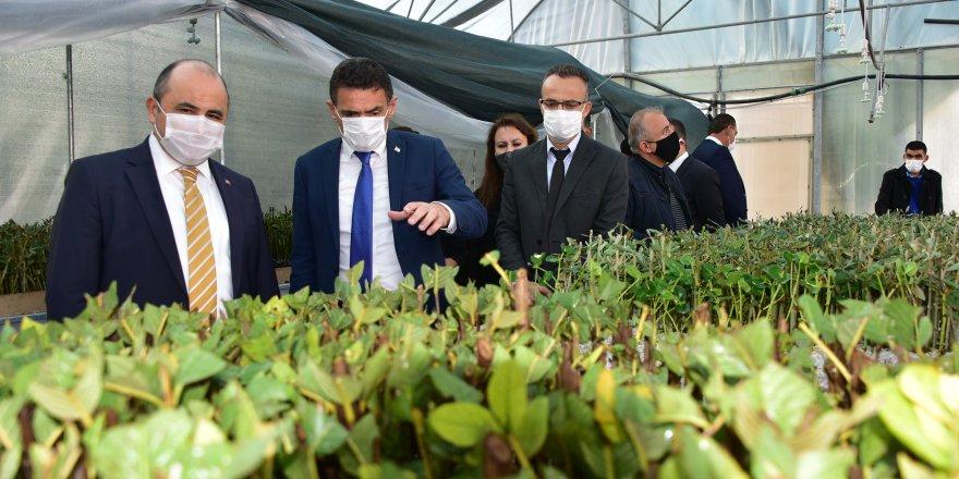 Tarımsal Araştırma Enstitüsü'nün fidan köklendirme kapasitesi 300 bine çıkartıldı