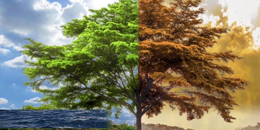 Sivil Toplum Örgütleri, iklim değişikliğinin yarattığı sorunlarla ilgili ortak deklarasyon yayımladı