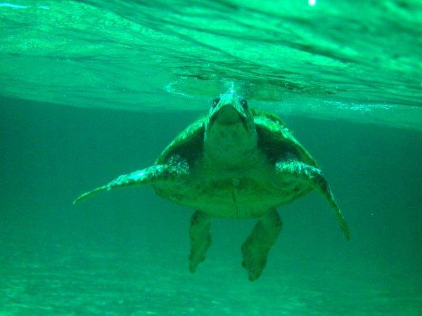 dau-fen-edebiyat-deniz-kaplumbagalarini-koruma-projesi-12.jpg