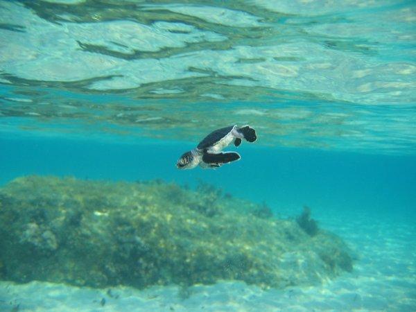 dau-fen-edebiyat-deniz-kaplumbagalarini-koruma-projesi-14.jpg