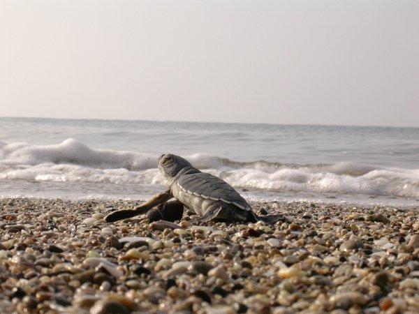 dau-fen-edebiyat-deniz-kaplumbagalarini-koruma-projesi-9.jpg