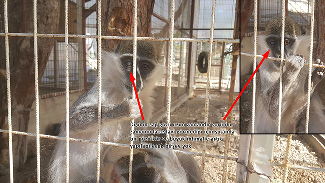 maymunlar-(2).jpg